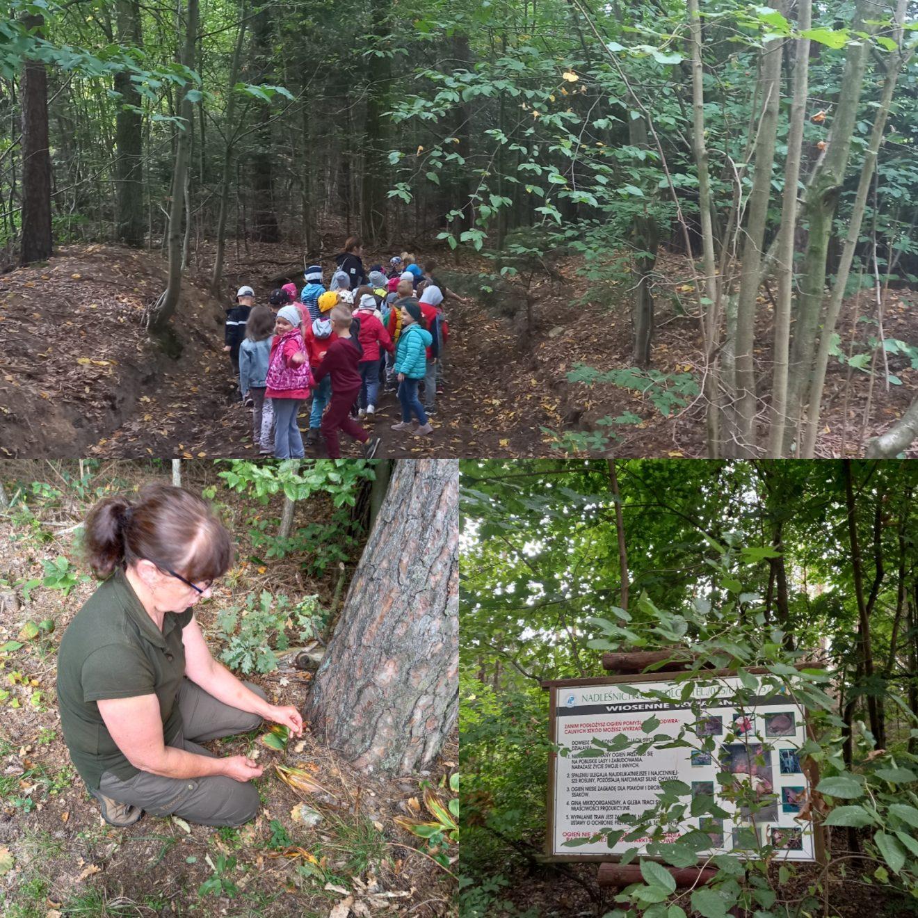 dzieci w lesie 1