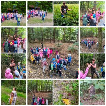 kolaż 4 dzieci obserwują przyrodę lasu